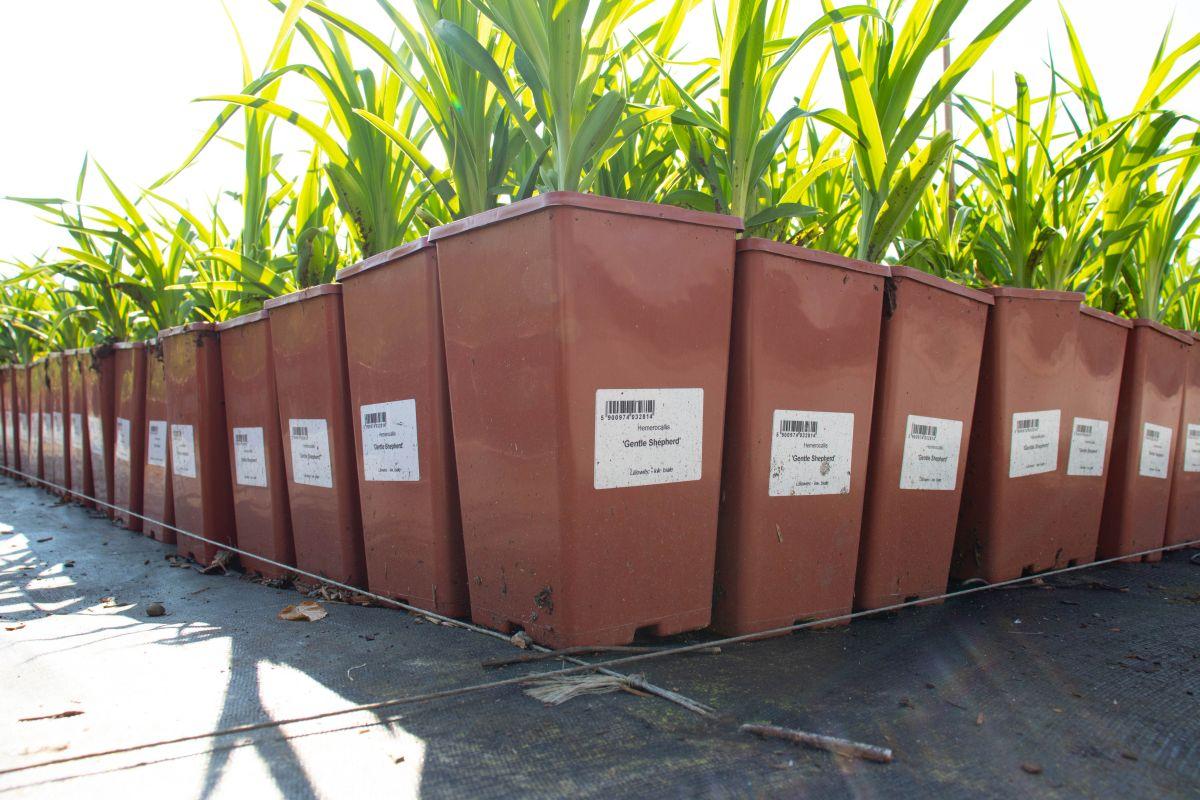 Zastosowanie samoprzylepnej etykiety do roślin na doniczce. Fot. Garden Label