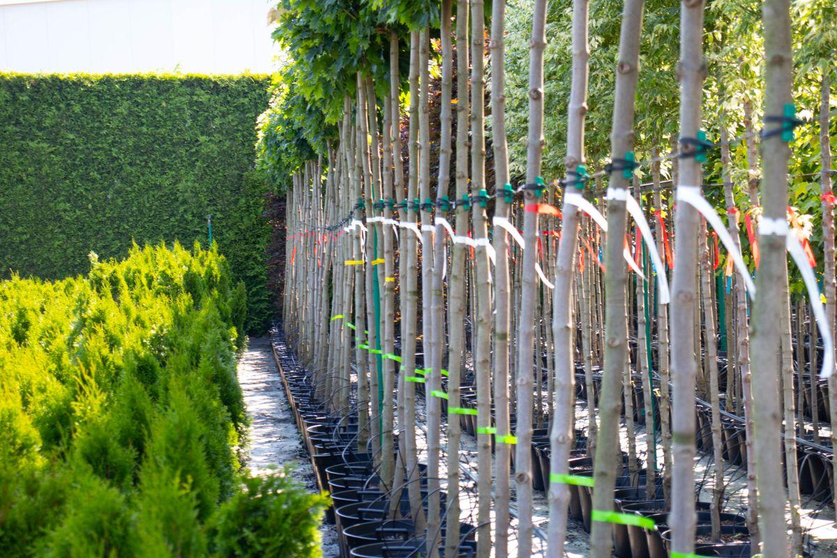 Pętelkowe etykiety do roślin w różnych kolorach. Przykład zastosowania. Fot. Garden Label